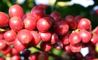 Die Qualität unserer Kaffee